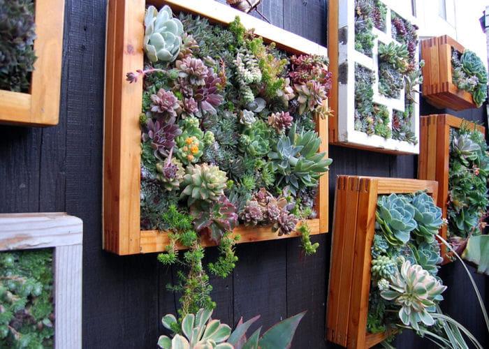 giardino-verticale-composizioni-terni-2