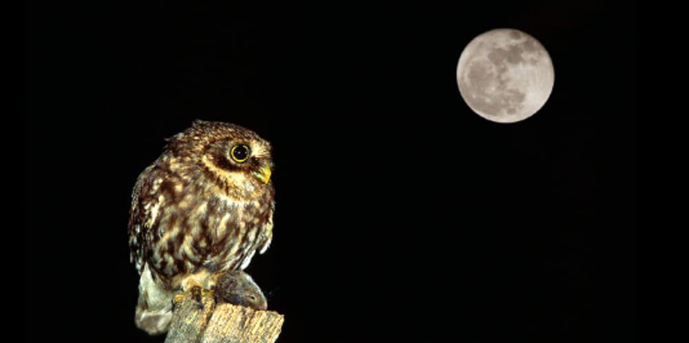 """""""Notte Europea della Civetta"""" (immagini di archivio)"""