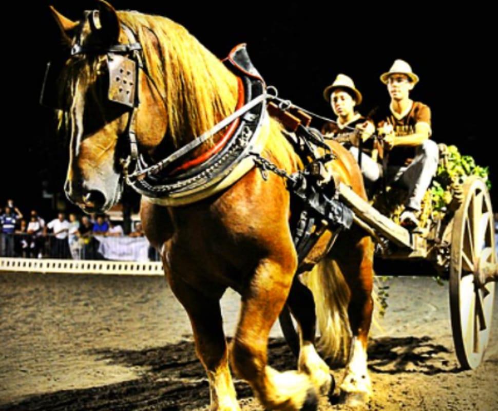 Psseggiate a cavallo (immagini di archivio)