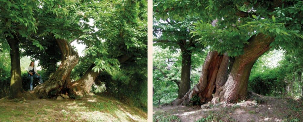 """""""Andar per Veci Maronari"""" a Monte di Malo (immagini di archivio)"""