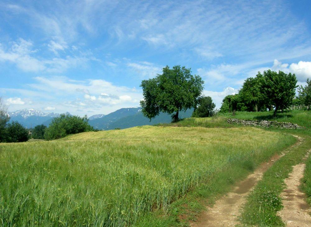 Paesaggio Pedemontana Vicentina